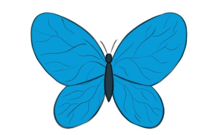 Как нарисовать бабочку легко для детей