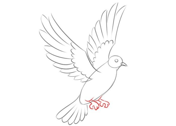 Как нарисовать голубя детям
