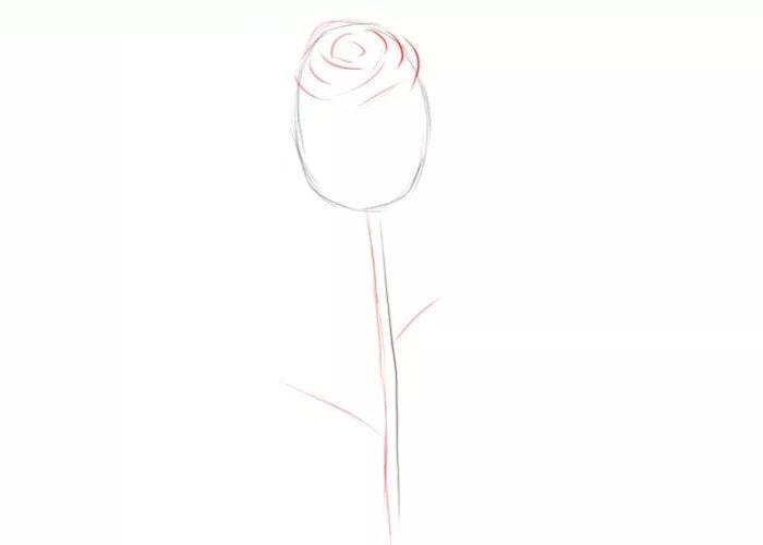 Как легко нарисовать розу